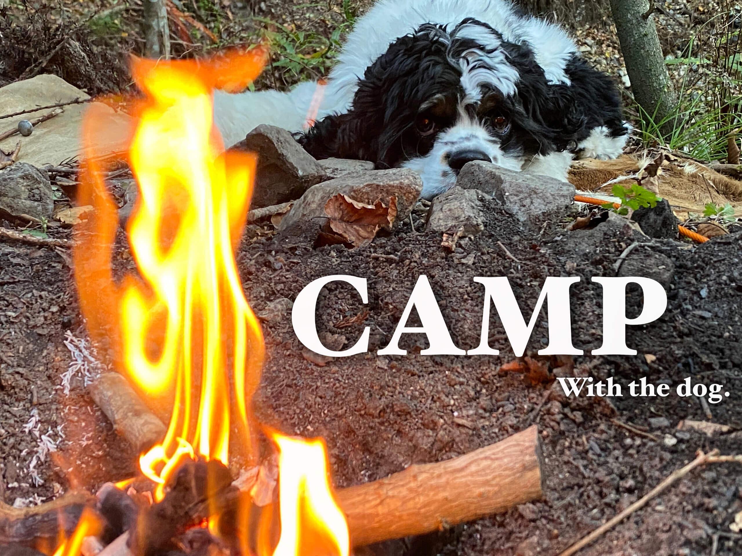 Campail調査!ワンちゃんと行けるキャンプ場リスト!